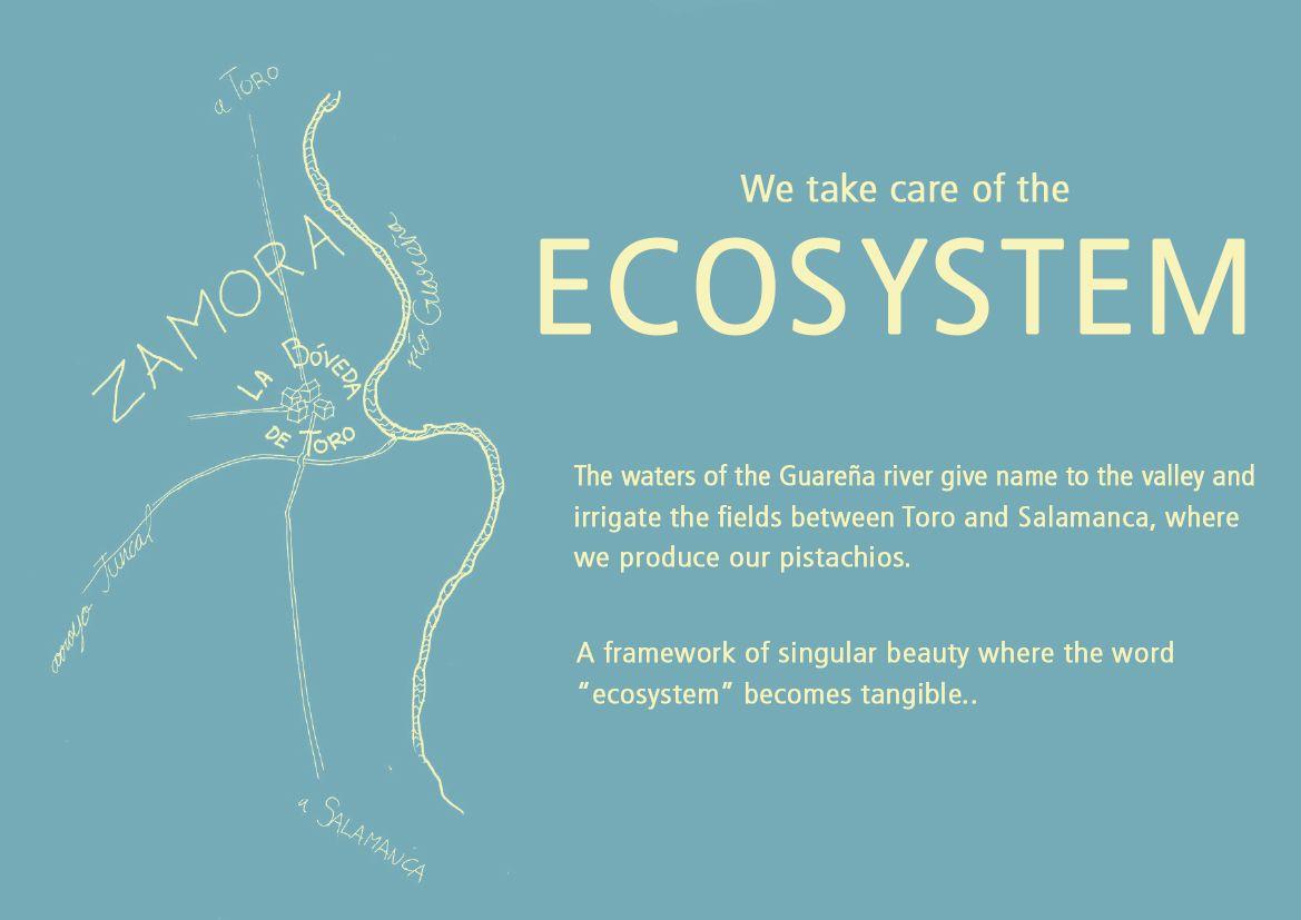 ecosystem-en